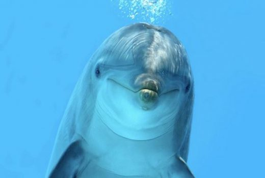 dolphin talking