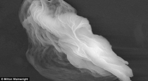 Organic 'ghost particle' harvested from the stratosphere. (Image credit: Milton Wainwright).