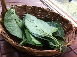 Leaves ready for healing ceremony (Image source: Roberto López Mélinchon).